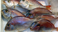Fisch erfreut sich bei vielen wachsender Beliebtheit, als guter Eiweißlieferantin der Ernährung. So stand auch ich vor Kurzem grübelnd an der Fischtheke des örtlichen Supermarktes und war durch die große […]